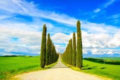 Tuscany, Cyprysowi drzewa biały drogowy wiejski krajobraz, Włochy, Europa obrazy stock