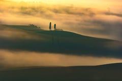 Tuscany, dwa osamotnionego drzewa i mgła, Włochy fotografia royalty free