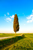 Tuscany, ensamt cypressträd och lantlig väg Siena Orcia dal Royaltyfri Bild