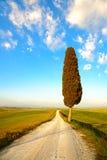 Tuscany, ensamt cypressträd och lantlig väg Siena Orcia dal Fotografering för Bildbyråer