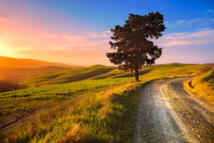 Tuscany, ensamt träd och lantlig väg på solnedgång Volterra Italien Fotografering för Bildbyråer
