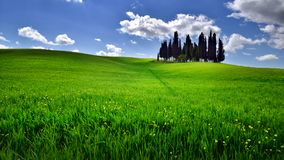 Tuscany famous cypress trees with blue sky and sunny summer day Stock Photo