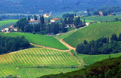 Tuscany Farmland. With vineyards and cypress trees Royalty Free Stock Photography