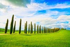 Tuscany, farmland, cypress trees row and field. Siena, Val d Orc Royalty Free Stock Image