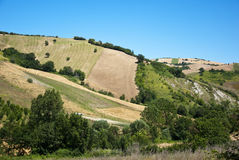 Tuscany fields Stock Image