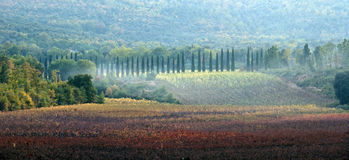 Tuscany fields royalty free stock images
