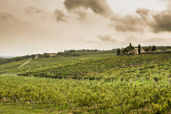 Tuscany fields Stock Photos