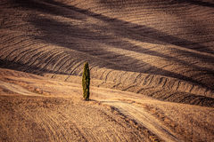 Tuscany fields autumn landscape, Italy. Harvest season Royalty Free Stock Photos