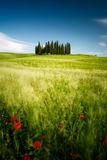 Tuscany fields Royalty Free Stock Photography