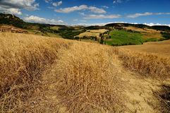 Tuscany fields Stock Photography