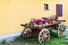 Tuscany flowers Stock Photos