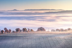 Tuscany foggy winter panorama, rolling hills and vineyard. Italy Royalty Free Stock Photos