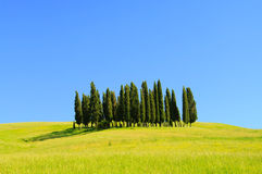 Tuscany forest. On green field hills Royalty Free Stock Image