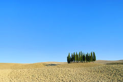 Tuscany forest in fall Royalty Free Stock Images