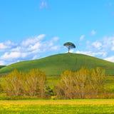 Tuscany gräsplan sätter in, och ensamt sörja treen landskap, Siena, Italien. Royaltyfri Foto