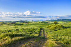 Tuscany Green field on meadow Stock Photography