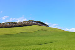 Tuscany, green field, pines, blue sky Siena, Italy Stock Photo