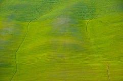Tuscany - green hill. Rolling green hills near Siena, Tuscany royalty free stock photography
