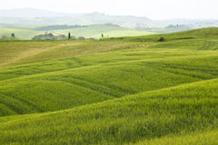 Tuscany - green typical landscape Stock Photography