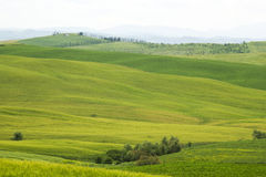 Tuscany - green typical landscape. In spring time Stock Photography