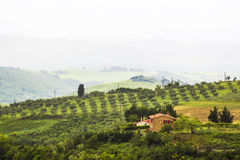 Tuscany - green typical landscape. In spring time Royalty Free Stock Image