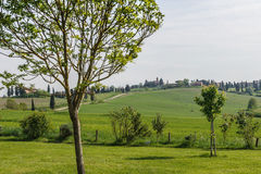 Tuscany Green Valley. A green beautiful valley in Tuscany (Italy Royalty Free Stock Image