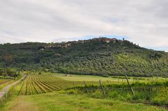 Tuscany  Grosetto hilltown with vineyards Stock Images