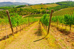 Tuscany. Hill of Tuscany with Vineyard in the Chianti Region Stock Images