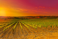 Tuscany. Hill of Tuscany with Vineyard in the Chianti Region, Sunset Stock Images