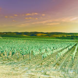 Tuscany Royalty Free Stock Images