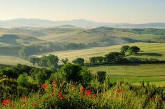 Tuscany hills. In Italy, fog, corn poppy and olive trees Royalty Free Stock Photos