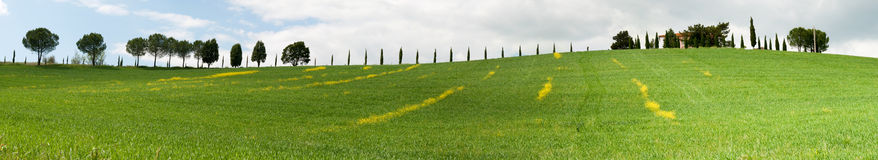 Tuscany hills. Overview of a hill with striped yellow flowers in Grosseto, Tuscany Royalty Free Stock Photography