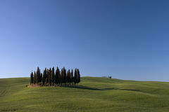 Tuscany Hills with Cypress Trees Stock Image