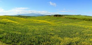 Tuscany hills with flowers on green fields Royalty Free Stock Photography