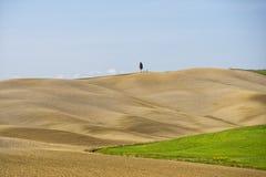 Tuscany hills landscape Royalty Free Stock Photos
