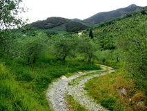 Tuscany hills near Pisa, Italy Royalty Free Stock Image