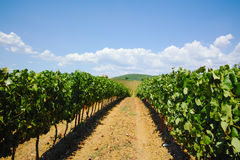 Tuscany hills vineyards, Italy Stock Images