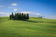Tuscany hillside. Tuscany green hillside near Siena with cypress trees royalty free stock images