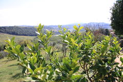 Tuscany 22 Stock Image