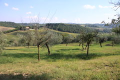 Tuscany 11 Royalty Free Stock Image