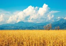 Tuscany, italian rural landscape stock photos