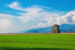 Tuscany, italian rural landscape royalty free stock image