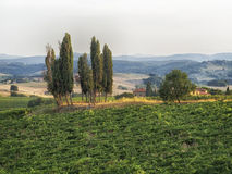 Tuscany Italien Arkivbilder