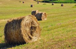 Typical hills with hay bales on a sunny day Tuscany, Italy  Stock Images
