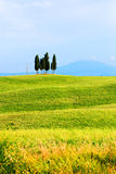 Tuscany, Italy. Cluster of cypress tress among rolling grassy hills in Tuscany, Italy Stock Photography