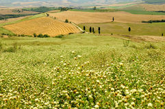 Tuscany, Italy Stock Photos