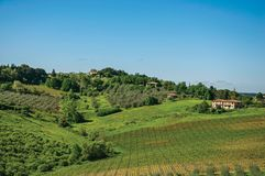 View of olive trees and hills with villa at the top in the Tuscan countryside. stock photography