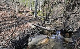 Mountain stream in Casentino Park royalty free stock images