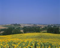 TUSCANY ITALY. Viwe over Sunflower field Tuscany Italy royalty free stock photography