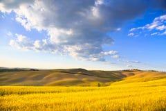 Tuscany, jordbruksmark, vete och gräsplanfält Pienza Italien Arkivbild